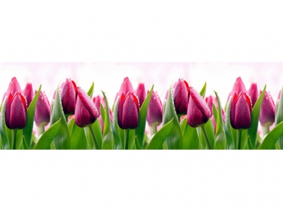 Фартук кухонный № 427 Тюльпаны